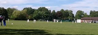 cricket-varsity2015